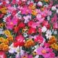 销售野花组和种子